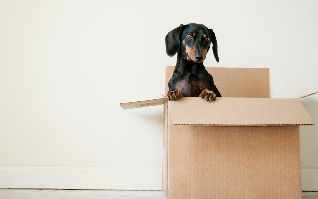 Best ways to find a reliable moving company