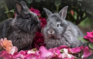 two rabbits and flowers