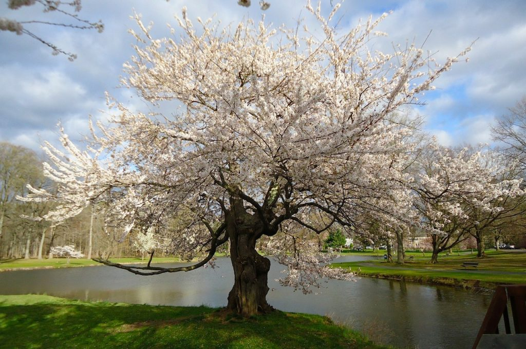 -a new jersey tree in the spring