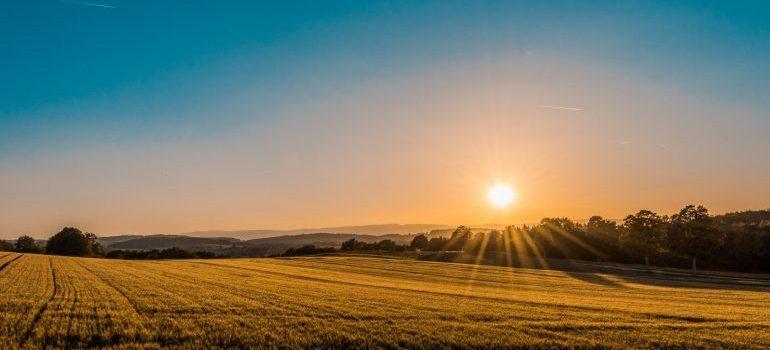 Sunrise over a wheat field