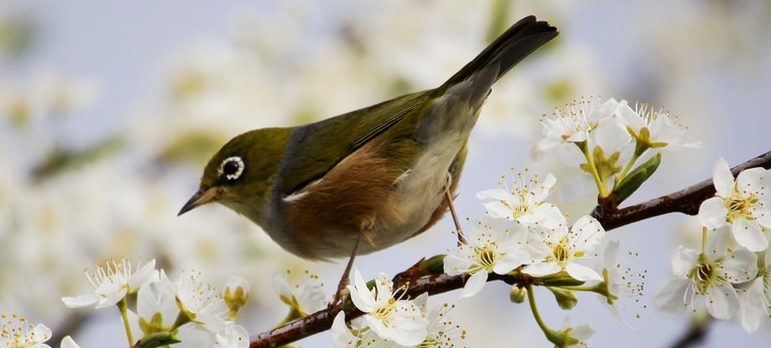 A bird on a blossoming tree
