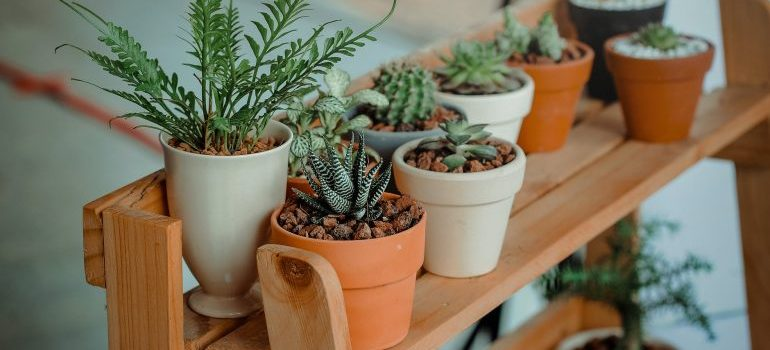 Green indoor potted plants